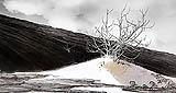 Desierto Volcanico